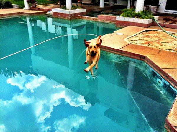 Удачные фото хозяина с собаками 24