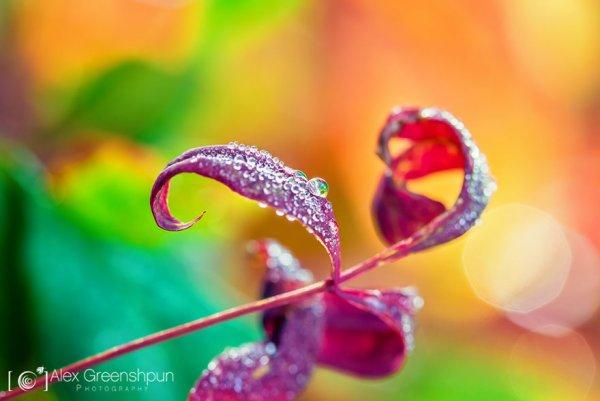 сказка золотая осень