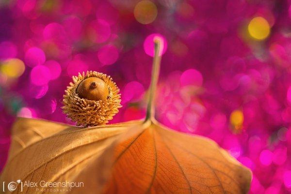 осень в лесу сказка