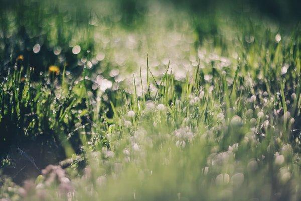 природа фото смотреть