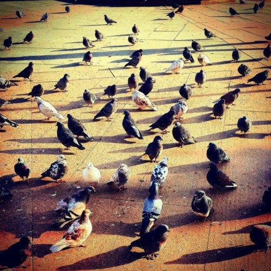 Городские птички
