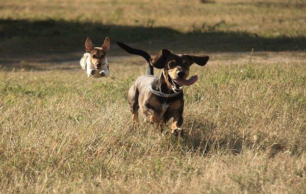 Когда ветер, собаки летают