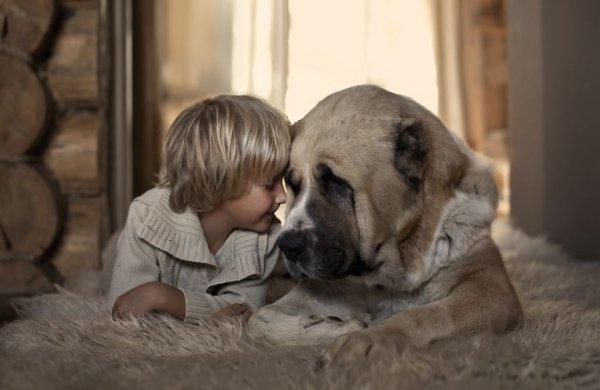 Лучшая собака для ребенка 2