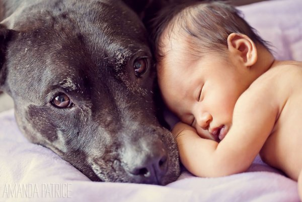 Лучшая собака для ребенка 10