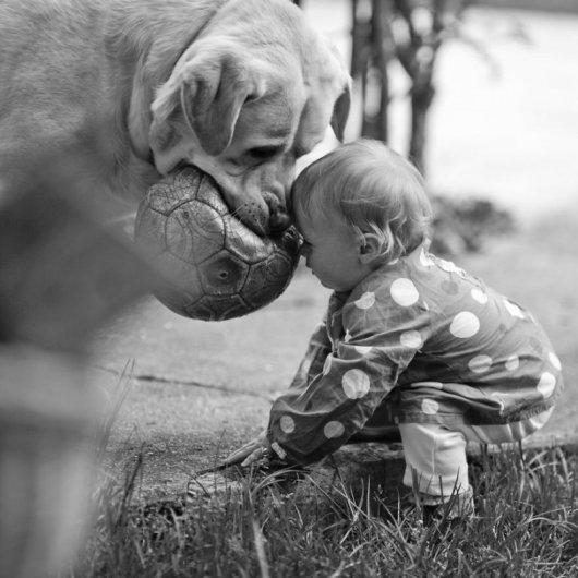 Лучшая собака для ребенка 14