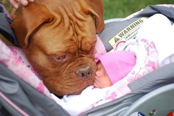 Лучшая собака для ребенка 18