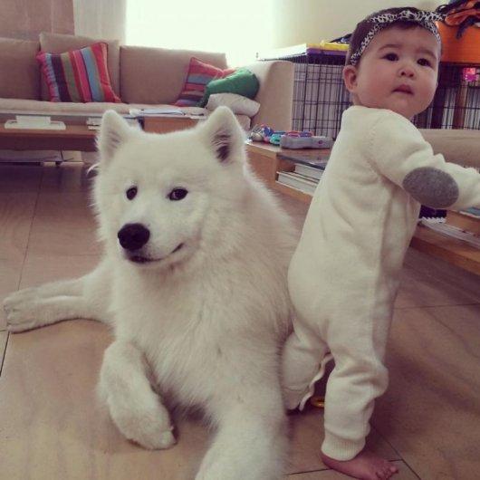 Лучшая собака для ребенка 22