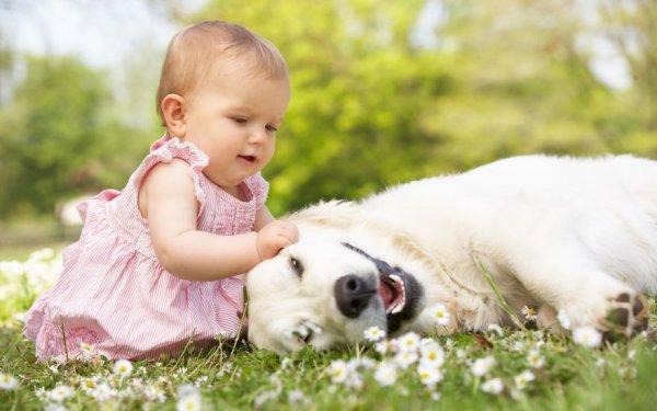 Лучшая собака для ребенка 26