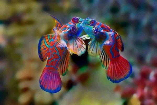 Необычный цвет