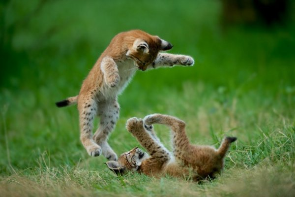 детеныши животных фото