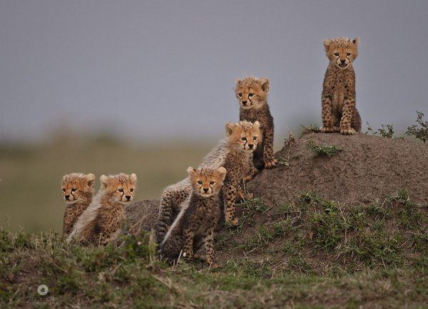 фото детенышей диких животных