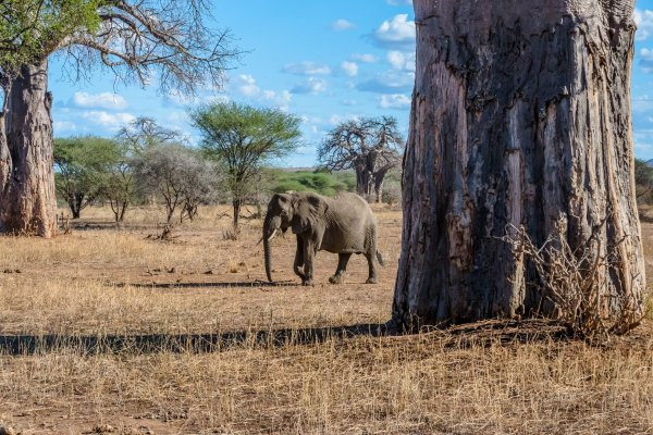 Моё путешествие по национальным паркам Танзании... - №4