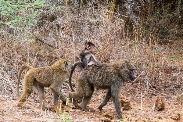 Моё путешествие по национальным паркам Танзании... - №8