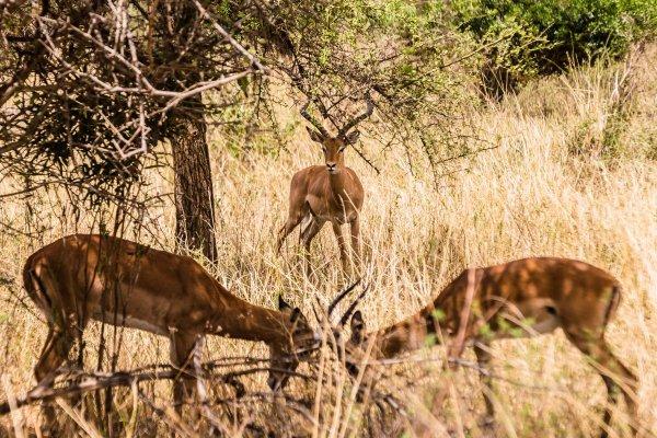 Моё путешествие по национальным паркам Танзании... - №12