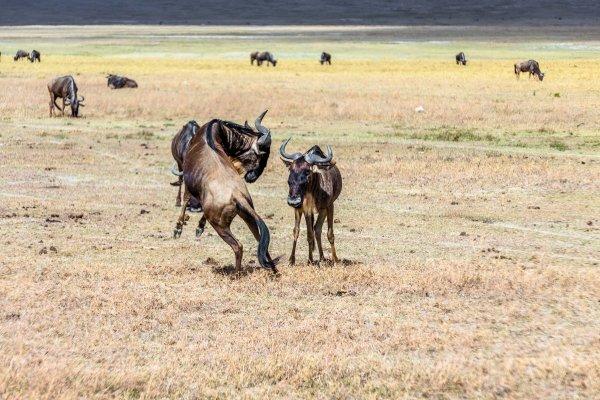 Моё путешествие по национальным паркам Танзании... - №20