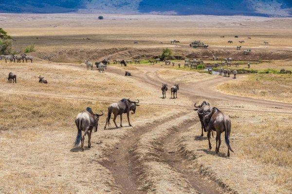 Моё путешествие по национальным паркам Танзании... - №24