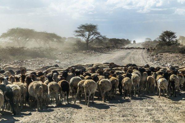 Моё путешествие по национальным паркам Танзании... - №28