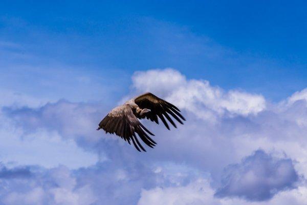 Моё путешествие по национальным паркам Танзании... - №36