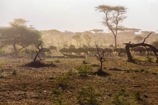 Моё путешествие по национальным паркам Танзании... - №44