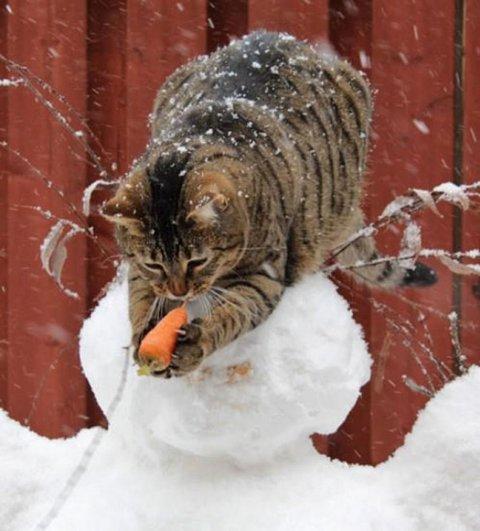 милые кошки фото