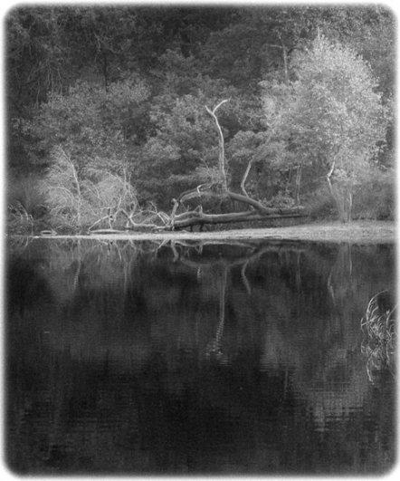 черно-белый пейзаж 16