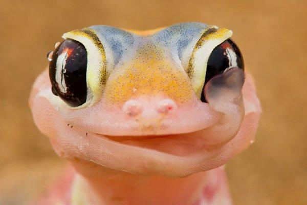 Рептилии фото