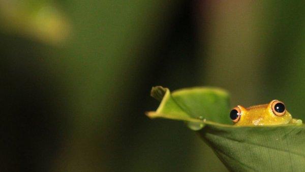 кожа рептилии фото